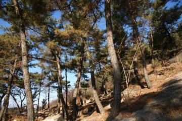 산 곳곳에 울울이 서 있는 나무들의 푸르름이 가득하다.