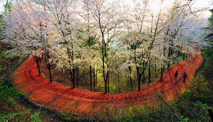 계족산 활톳길은 사계절 중 봄에 가장 아름답다.